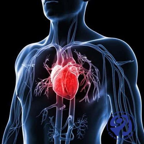 Đối với hệ tim mạch